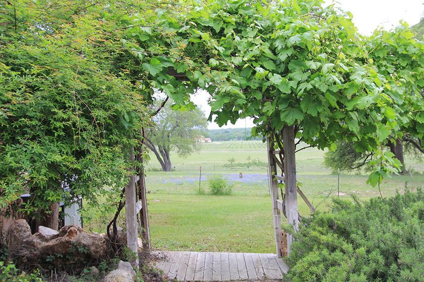 vineyard-10